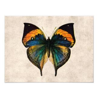 Vintage Butterfly Illustration 1800's Butterflies Art Photo