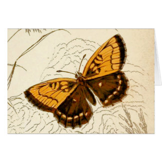 Vintage Butterfly Illustration, Gold and Brown Card