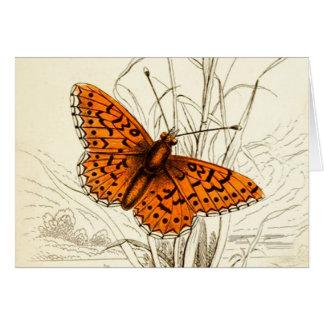 Vintage Butterfly Illustration, Orange and Black Card