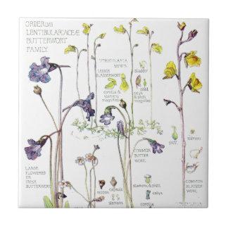 Vintage Butterwort Wildflower Flowers Tile