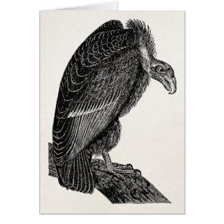 Vintage Californian Vulture Bird - Birds Template