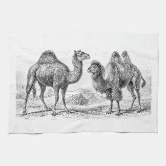 Vintage Camel Illustration - Retro Antique Camels Kitchen Towel