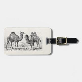 Vintage Camel Illustration - Retro Antique Camels Luggage Tag