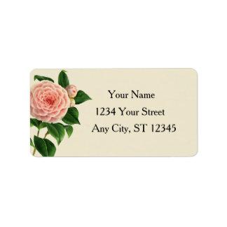 Vintage Camellia Botanical