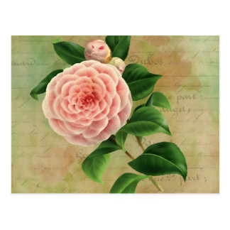 Vintage Camellia French Botanical Postcard