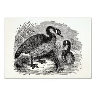 Vintage Canadian Goose Bird - Geese Birds Template