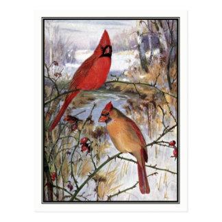 Vintage Cardinal by Robert Bruce Horsfall Postcard