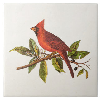 Vintage Cardinal Song Bird Illustration - 1800's Tile