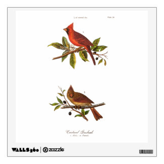 Vintage Cardinal Song Bird Illustration - 1800's Wall Decal