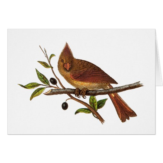 Vintage Cardinal Song Bird Illustration - Female Card