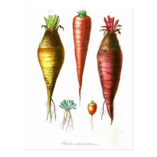 Vintage Carrots Vegetarian Postcard