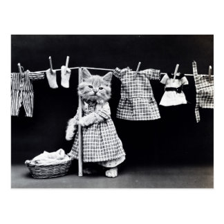 Vintage Cat Hanging Cloths Out to Dry Postcard