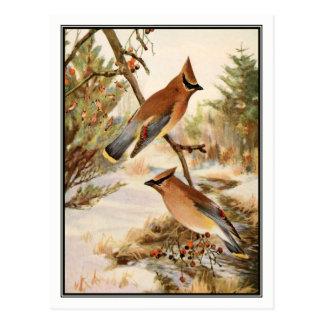 Vintage Cedar Waxwing by Robert Bruce Horsfall Postcard