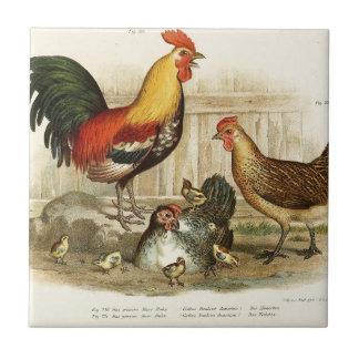 Vintage Chicken family illustration Tile