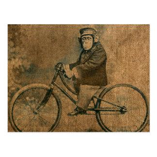 Vintage Chimp Riding a Bicycle Postcard