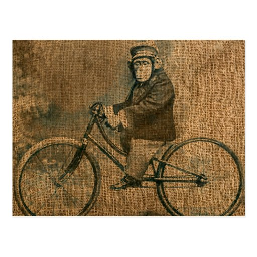 Vintage Chimp Riding a Bicycle Post Cards