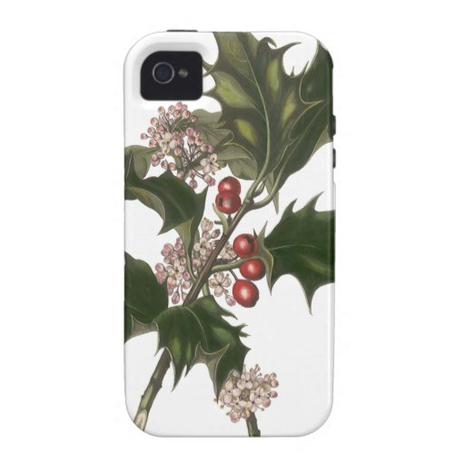 Vintage Christmas Holly Plant with Red Berries iPhone 4 Cases