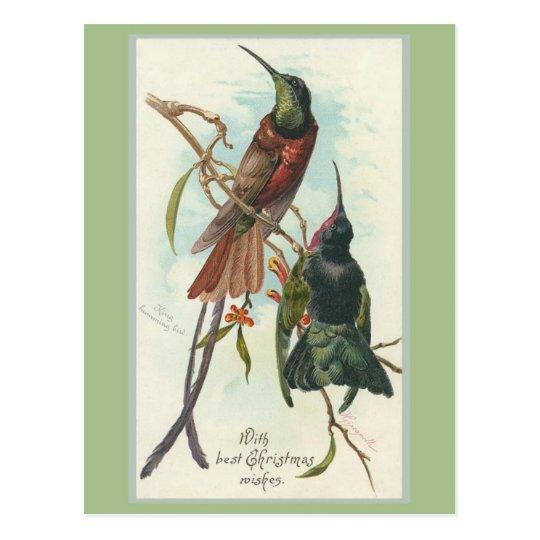 Vintage Christmas King Humming Birds Postcard