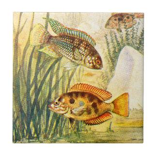 Vintage Cichlid Fish Tile