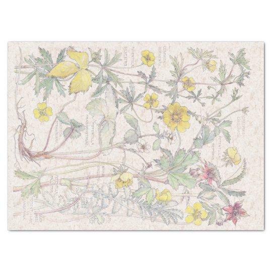 Vintage Cinquefoil Wildflower Flowers Tissue Paper