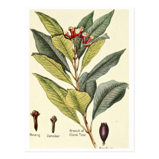 Vintage cloves illustration postcard recipe card