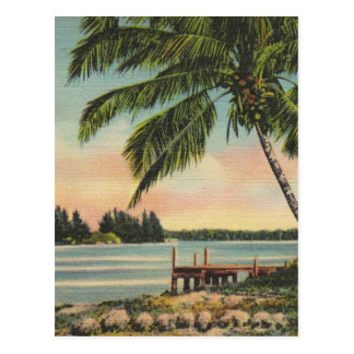 Vintage coconut palms postcard