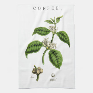 Vintage Coffee Plant Illustration Kitchen Towel