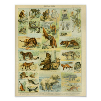 Vintage Color Wildlife Mammals Print