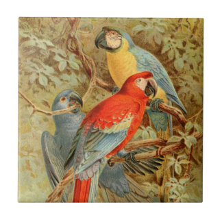 Vintage Colorful Macaws Tile
