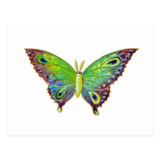 Vintage Colorful Moth Postcard