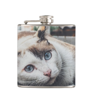 Vintage Colors Cat Flasks
