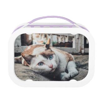 Vintage Colors Cat Lunchbox