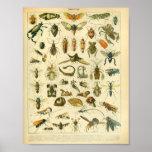 Vintage Colour Insect Art Print
