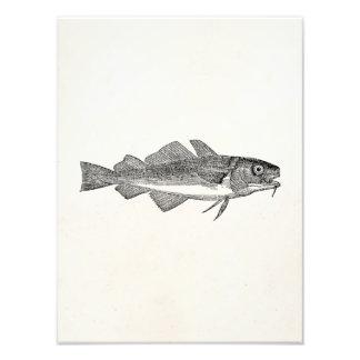 Vintage Common Cod Fish - Aquatic Fishes Template Photo Print
