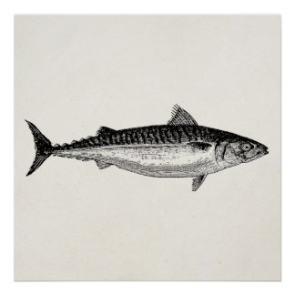 Vintage Common Mackerel Fish - Aquatic Template Poster