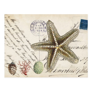 Vintage Conch starfish and seashells postcard
