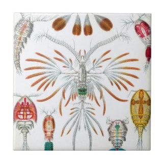 Vintage Copepoda Ocean Animals by Ernst Haeckel Ceramic Tile