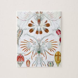 Vintage Copepoda Ocean Animals by Ernst Haeckel Puzzle