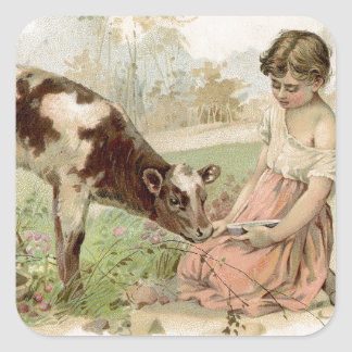 Vintage Country Girl Feeding Calf Square Sticker
