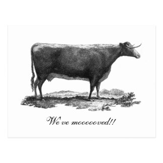 Vintage cow change of address card