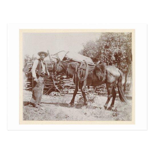 Vintage Cowboy 1900 Postcard