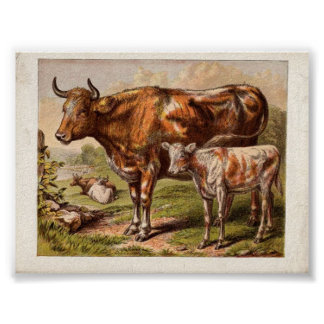 Vintage Cows Poster
