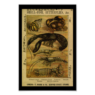 Vintage Crab Lobster Natural History Print