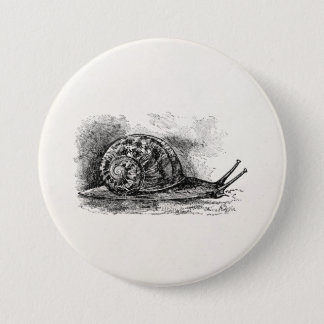 Vintage Crawling Snail Antique Template 3 Inch Round Button