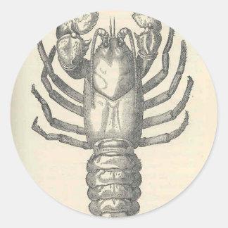 Vintage Crayfish Illustration (1896) Round Sticker