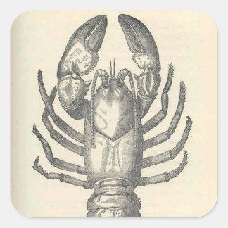 Vintage Crayfish Illustration (1896) Square Sticker