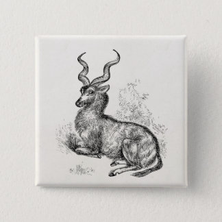 Vintage Curly Horn Gazelle Antelope Personalized 2 Inch Square Button
