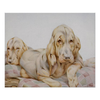 Vintage Cute Bloodhounds, Puppy Dogs by EJ Detmold Print