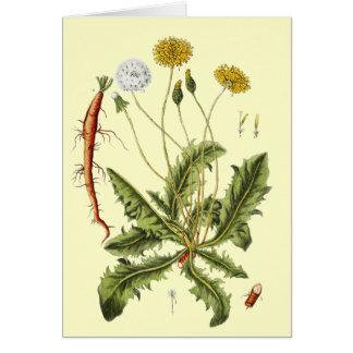 Vintage Dandelion Illustration Card