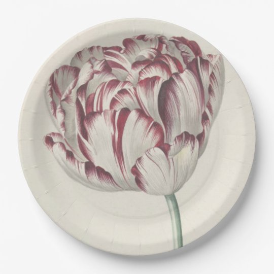 Vintage design with a white and red tulip 9 inch paper plate